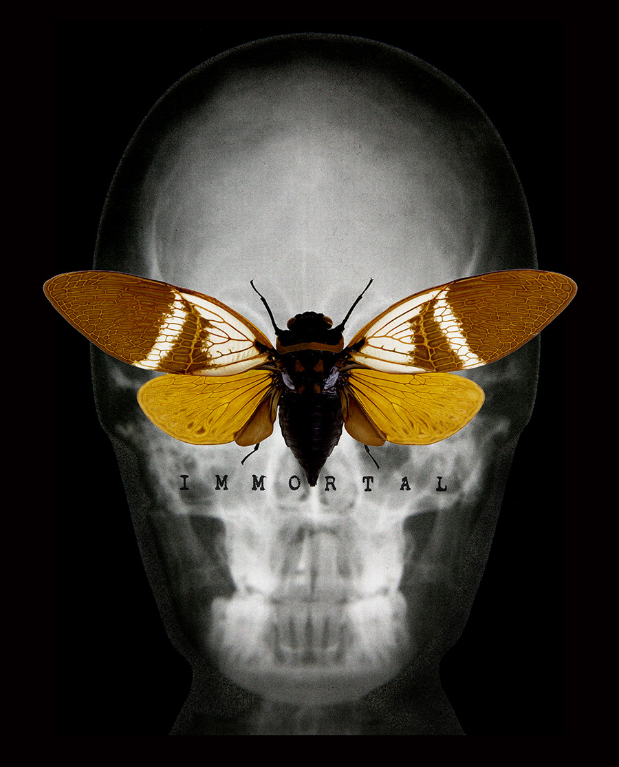 skull-moth-immortal-prt